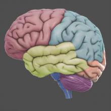 Meditatie helpt ons brein ontstressen